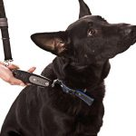 Dog-e Walk Dog Trainer