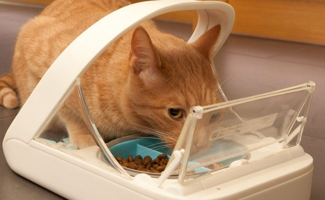 surefeed microcheep cat feeder