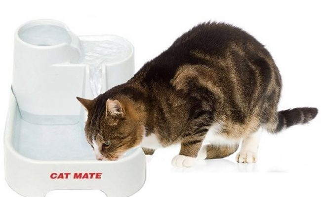 cat water fountain review